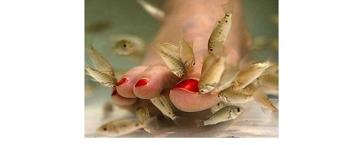 FishPedicure.jpg